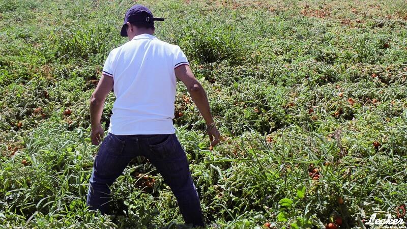 lecker_muss_es_sein_11_2015_Pressereise-zur-Tomatenernte-nach-Badajos-in-Spanien-mit-Maggi-10